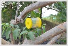 NaturePinks Fruitfly Trap