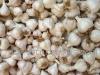 NaturePinks Organic Garlic - ready to pack