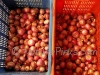 NaturePinks Organic Onion - ready to pack